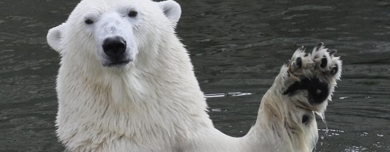 Когда Аляска вернется в Россию?