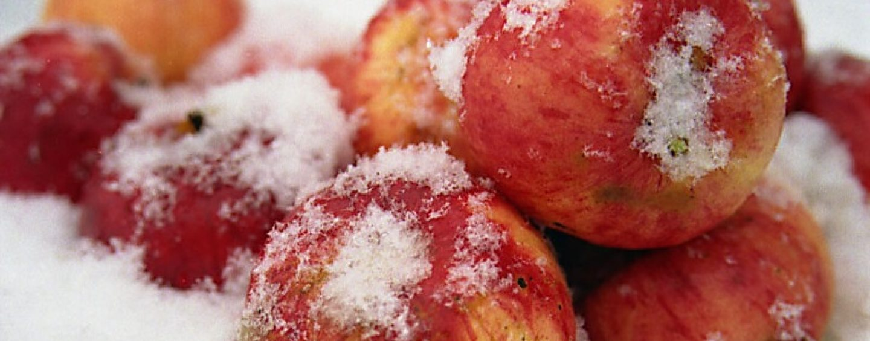 Яблоки на снегу 30 лет спустя. Самое интересное о Михаиле Муромове