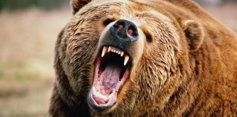 Что делать, если на вас напал медведь?