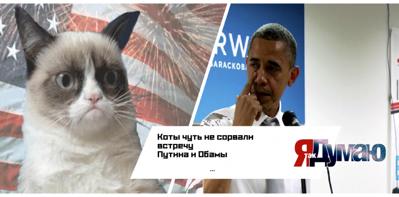 Турецкие коты VS Обама. Кто кого?