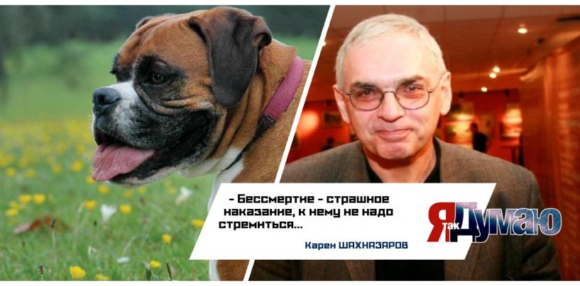 Собака-зомби. Британцы клонировали мертвого пса
