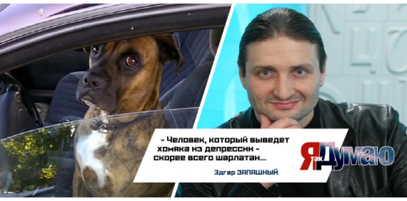 Собака угнала машину своей хозяйки и врезалась в супермаркет.