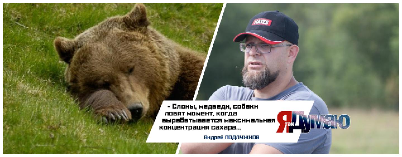 Пьяная медведица и другие животные алкоголики — вылечимся вместе!