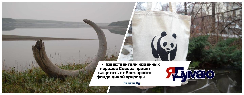 Деятельность Всемирного фонда дикой природы вызывает возмущение у коренного населения Таймыра