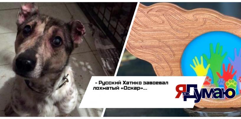 Русский Хатико стал победителем первого международного конкурса «Мой ласковый и нужный зверь»