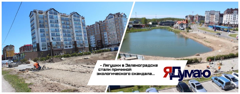 Защитница лягушек вмешалась в благоустройство карьера в Зеленоградске