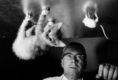 Ученым нужны мыши — Сергей Минаев