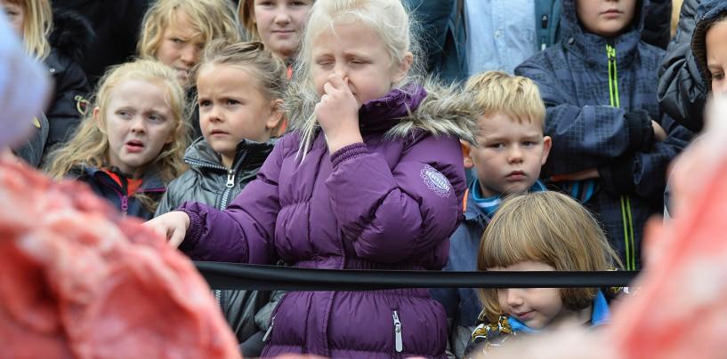 Жуткие кадры препарирования льва на глазах у детей!