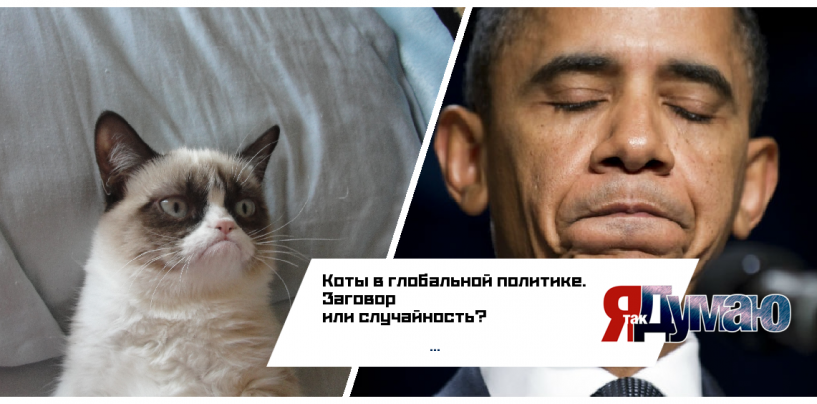 Кошачий заговор против Обамы на саммите G20.