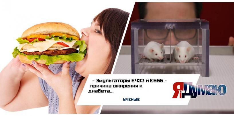 Причина ожирения — эльмульгаторы Е433 и Е566.
