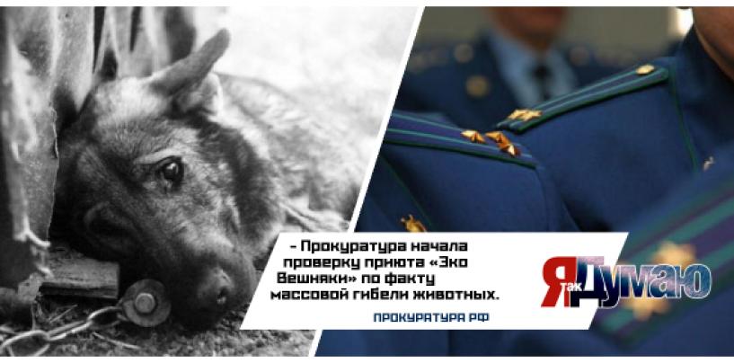 Десятки мертвых животных обнаружены в приюте «Эко-Вешняки».