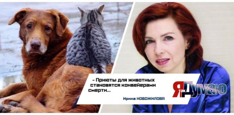 В убийствах животных в приюте «Эко-Вешняки» виновато государство?