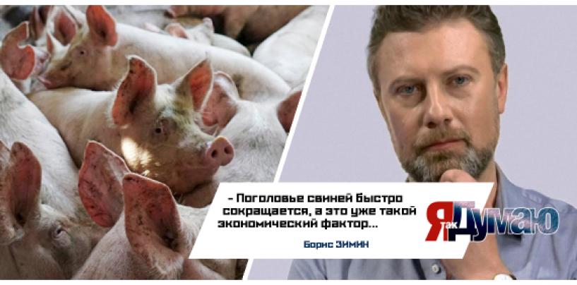 Поросята в опасности! Свиная чума грозит экономической катастрофой