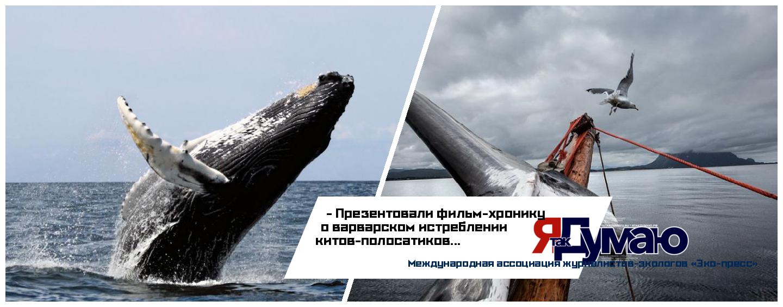 Действия Норвегии по добыче китового мяса грозят исчезновением популяции китов-полосатиков